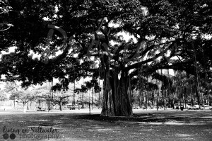 Living on Saltwater Photography -Hawaiian Tree